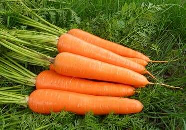 胡萝卜有哪些养生功效?