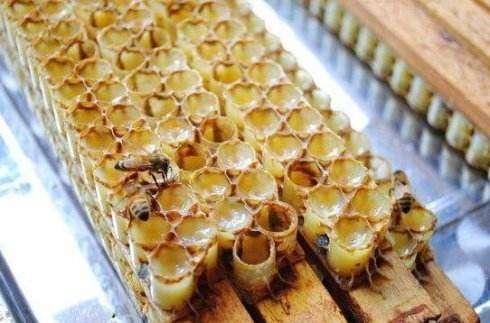 蜂王浆的功效与作用及食用方法有那些?---千米饮食网(www.kmysw.com)