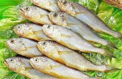 黄鱼营养功效、相克相宜及预处理