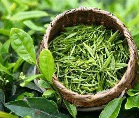 庐山云雾茶的传说典故---千米饮食网