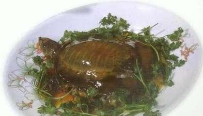 夏季食甲鱼有什么好处?