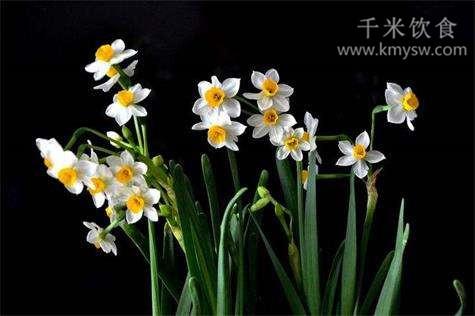 11种鲜花不宜入室---千米饮食网