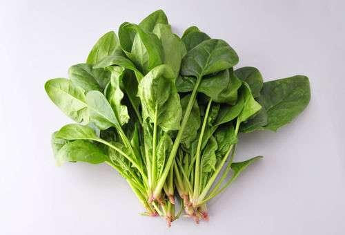 吃菠菜的禁忌及百科事项---千米饮食网