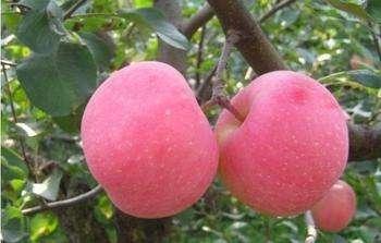 苹果的功效与作用 苹果的食用方法