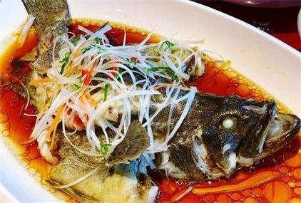 清蒸石斑鱼的做法及介绍---千米饮食网