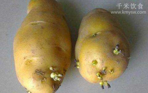 土豆、红薯、葱姜蒜发芽后还能吃吗?---千米饮食网