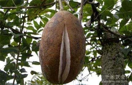 野香蕉能吃吗 野香蕉和香蕉的区别