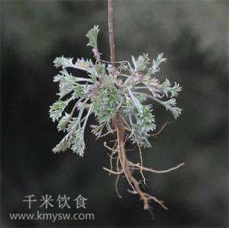中医提醒:春季养生别忘了这5种菜,现在知道也不晚---千米饮食网