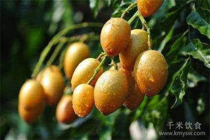 黄皮是凉性水果吗?黄皮是哪里的特产?---千米饮食网