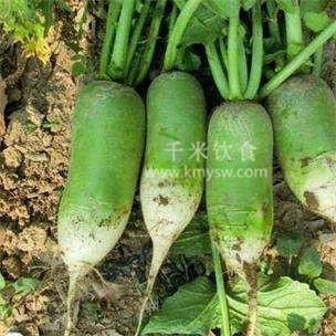绿萝卜对身体有什么好处?---千米饮食网