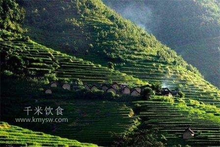 妙曼普洱是什么样的茶?---千米饮食网(www.kmysw.com)