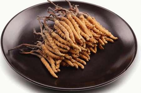 冬虫夏草的概念与特征---千米饮食网