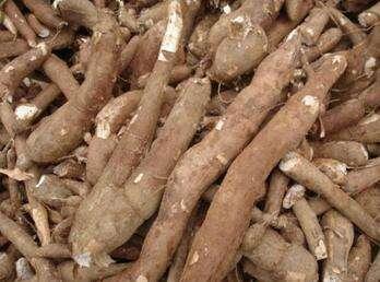 木薯的功效与作用_木薯的营养价值和食用方法