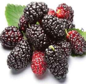 肾气不足吃什么水果好?---千米饮食网(www.kmysw.com)