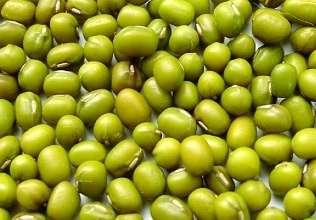 夏季巧选绿豆,夏季选绿豆的小技巧