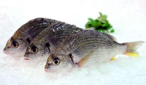 立鱼的作用与功效_立鱼的食用方法和食用禁忌