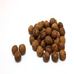 秋季养生 11种补肾健脾食物