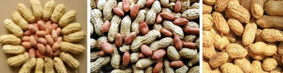 花生的营养功效以及食用禁宜与怎样挑选保存