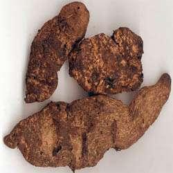 生地的营养价值和功效及作用以及搭配食用禁忌与选购