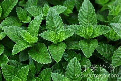 仙草(仙人草)的营养价值和功效及作用以及搭配食用禁忌
