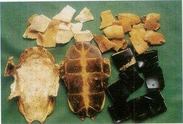 龟板的营养价值和功效及作用以及搭配食用禁忌