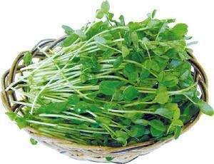 香椿苗(香椿芽)的营养价值和功效及作用以及搭配食用禁忌