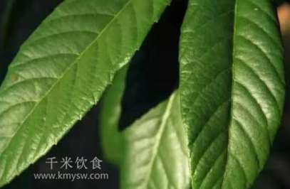枇杷叶煮水喝有哪些功效?---千米饮食网(www.kmysw.com)