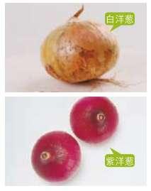 洋葱营养功效、相克相宜及预处理