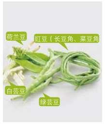 芸豆营养功效、相克相宜及预处理