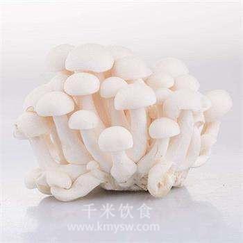白玉菇的功效与作用集锦及百科介绍---千米饮食网