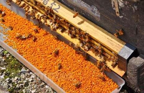 茶花粉的功效与作用及百科介绍---千米饮食网(www.kmysw.com)