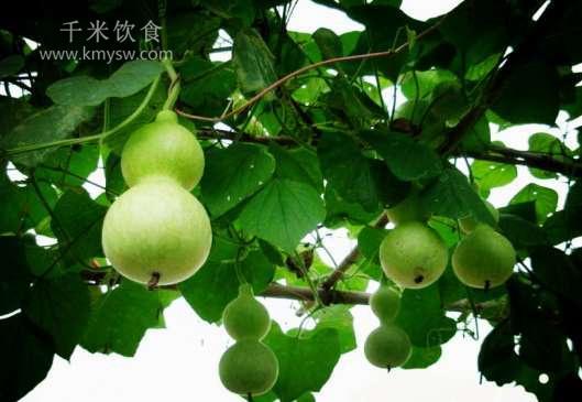 葫芦的功效与作用及百科介绍---千米饮食网(www.kmysw.com)
