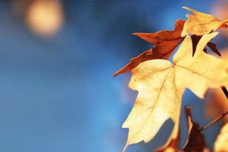 教你秋季如何养生?