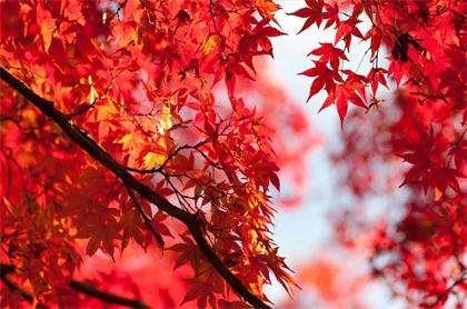 秋季应该如何养生 秋季保养知识大全---千米饮食网