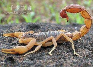 蝎子不应上餐桌---千米饮食网