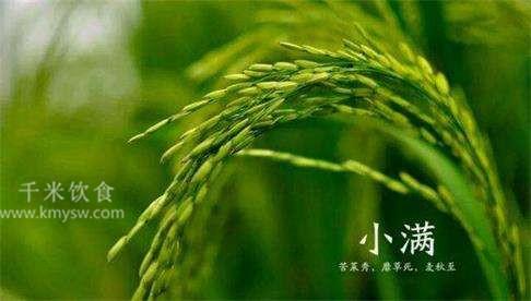 小满节气的由来和习俗文化---千米饮食网(www.kmysw.com)