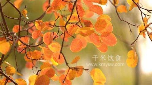 秋季养生小常识 秋季养生该吃什么?---千米饮食网