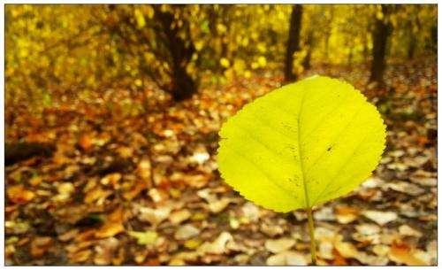 秋冬交替,多吃这些更滋养---千米饮食网